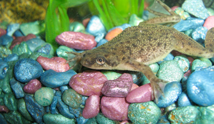 Best Food For African Dwarf Frogs