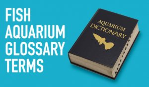 Fish Aquarium Glossary Terms