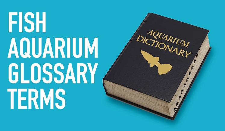 Fish Aquarium Glossary Terms