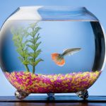Keeping Guppies in a Glass Fish Bowl