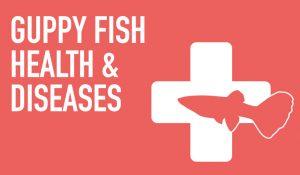 Guppy Fish Health & Diseases